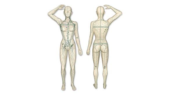 Lymphsystem -